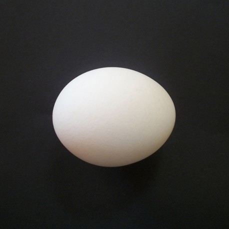 Uovo in plastica